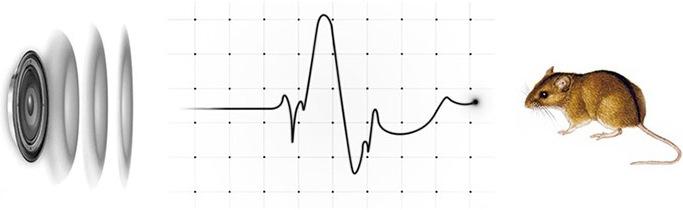 Град Ультра 3Д создает ультразвуковые колебания частотой от 24 до 26 кГц